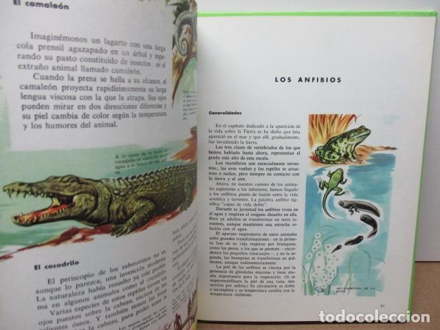 Enciclopedias de segunda mano: MI ENCICLOPEDIA LOS ANIMALES.-EDICIONES GAISA-S/F - Foto 11 - 83863420