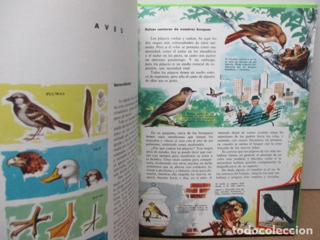 Enciclopedias de segunda mano: MI ENCICLOPEDIA LOS ANIMALES.-EDICIONES GAISA-S/F - Foto 12 - 83863420
