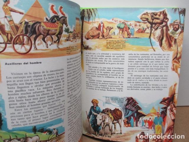 Enciclopedias de segunda mano: MI ENCICLOPEDIA LOS ANIMALES.-EDICIONES GAISA-S/F - Foto 13 - 83863420