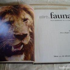 Enciclopedias de segunda mano: FAUNA. Lote 89777820