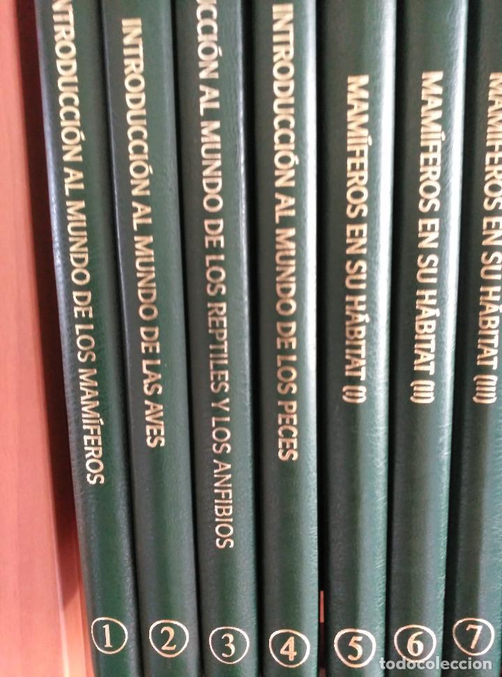 Enciclopedias de segunda mano: NATIONAL GEOGRAPHIC - EL MARAVILLOSO MUNDO DE LOS ANIMALES - 17 TOMOS - Foto 3 - 97104687