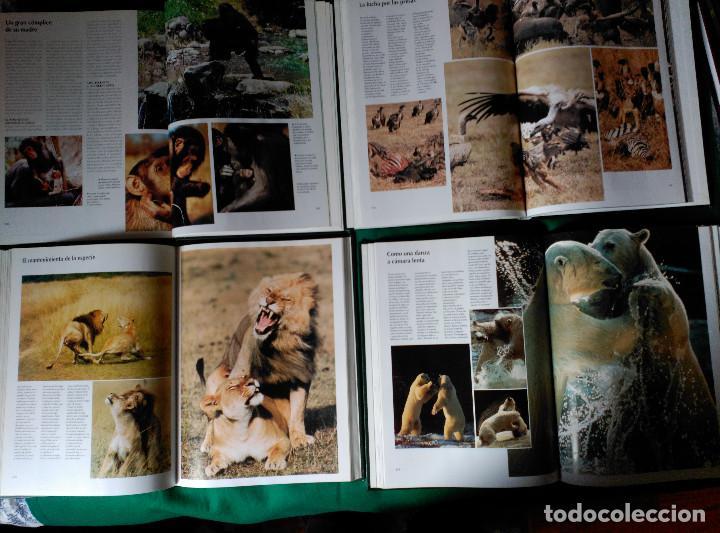 Enciclopedias de segunda mano: NATIONAL GEOGRAPHIC - EL MARAVILLOSO MUNDO DE LOS ANIMALES - 17 TOMOS - Foto 7 - 97104687