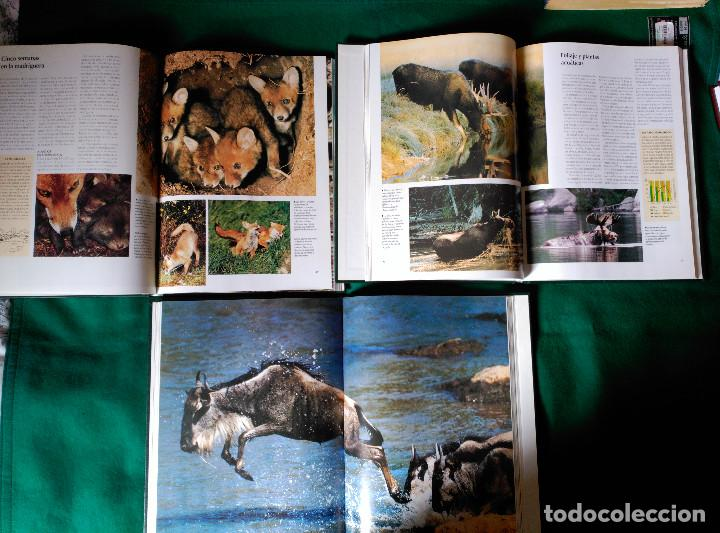 Enciclopedias de segunda mano: NATIONAL GEOGRAPHIC - EL MARAVILLOSO MUNDO DE LOS ANIMALES - 17 TOMOS - Foto 9 - 97104687