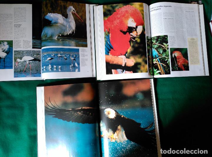 Enciclopedias de segunda mano: NATIONAL GEOGRAPHIC - EL MARAVILLOSO MUNDO DE LOS ANIMALES - 17 TOMOS - Foto 11 - 97104687