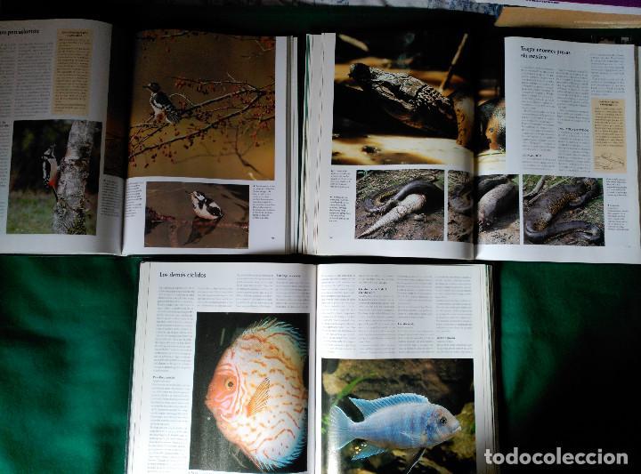 Enciclopedias de segunda mano: NATIONAL GEOGRAPHIC - EL MARAVILLOSO MUNDO DE LOS ANIMALES - 17 TOMOS - Foto 13 - 97104687