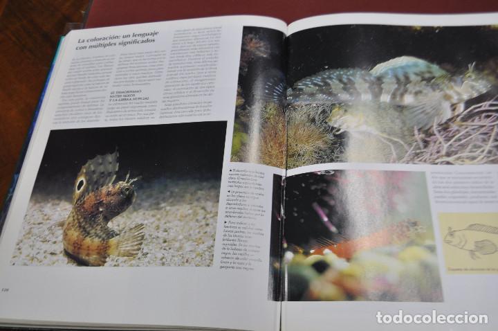 Enciclopedias de segunda mano: national geographic , el maravilloso mundo de los animales - 17 tomos completa - ENM - Foto 3 - 105006255