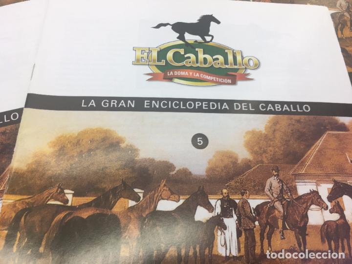 Enciclopedias de segunda mano: FASCICULO 1 - 2 - 3 - 4 - 5 DE LA GRAN ENCICLOPEDIA DEL CABALLO - EDICIONES DEL PRADO - Foto 6 - 108437899