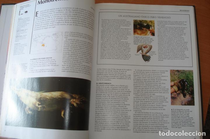 Enciclopedias de segunda mano: Enciclopedia NATIONAL GEOGRAPHIC. El maravilloso mundo de los animales. RBA Ediciones. 15 Tomos. - Foto 2 - 126778651
