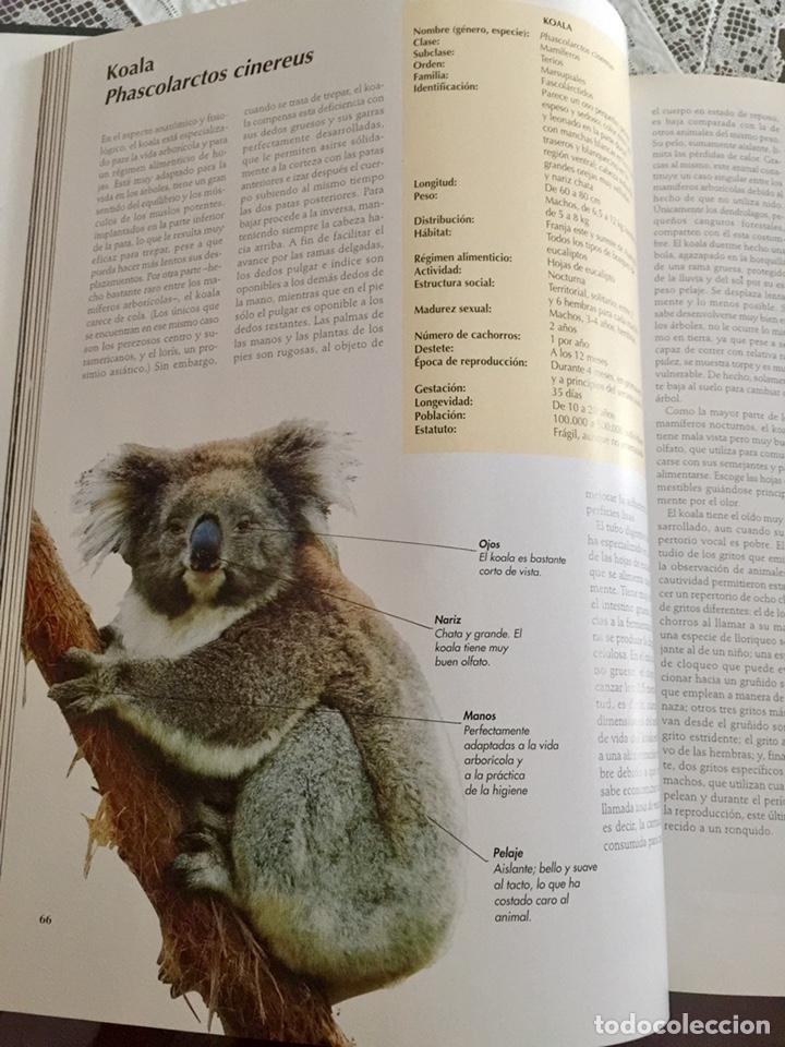 Enciclopedias de segunda mano: El maravilloso mundo de los animales National Geographic - Foto 3 - 153234436