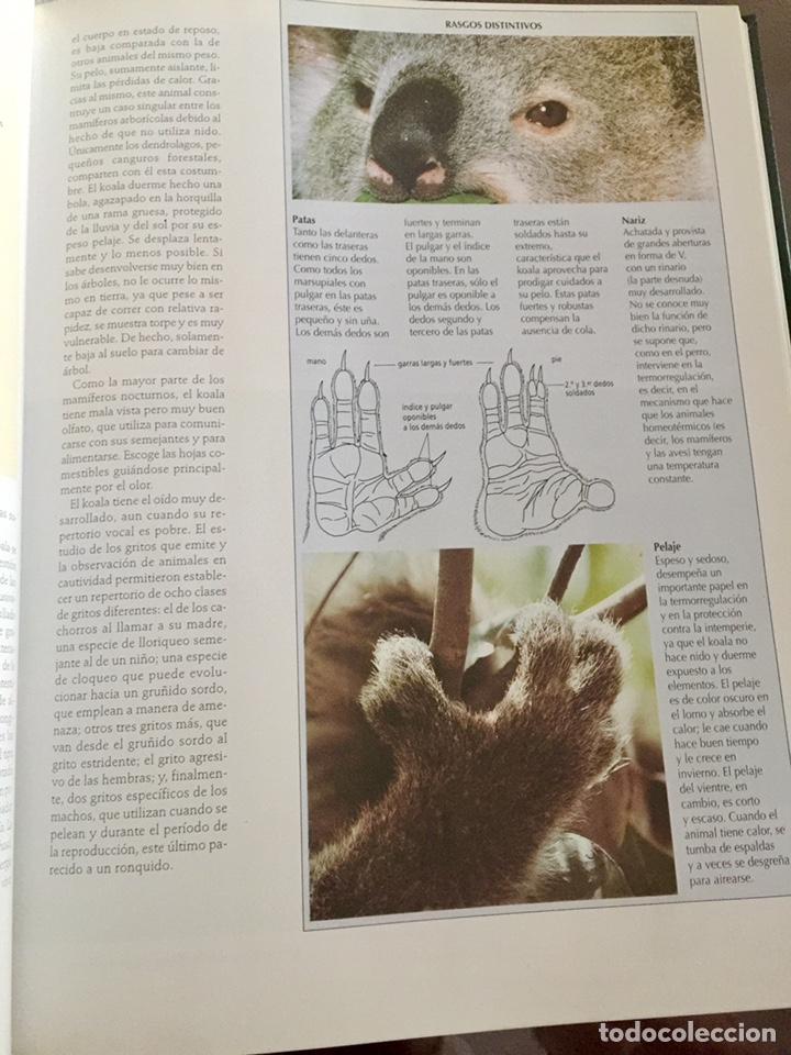 Enciclopedias de segunda mano: El maravilloso mundo de los animales National Geographic - Foto 4 - 153234436