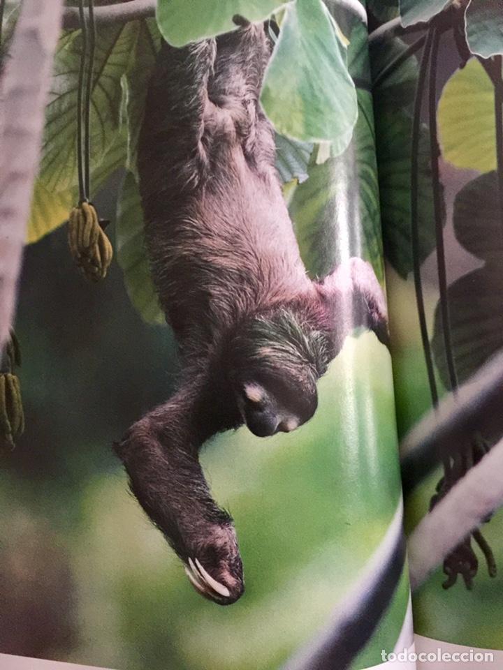 Enciclopedias de segunda mano: El maravilloso mundo de los animales National Geographic - Foto 5 - 153234436