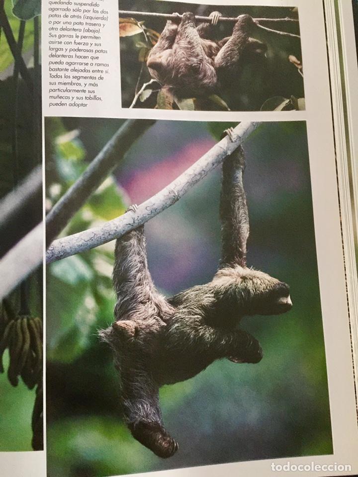 Enciclopedias de segunda mano: El maravilloso mundo de los animales National Geographic - Foto 6 - 153234436