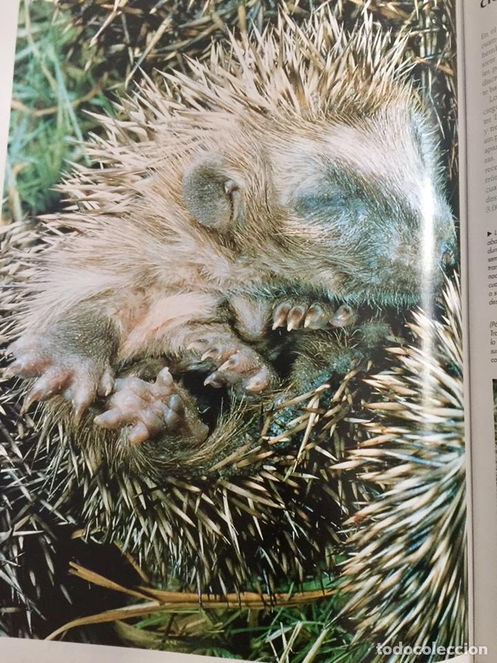 Enciclopedias de segunda mano: El maravilloso mundo de los animales National Geographic - Foto 7 - 153234436