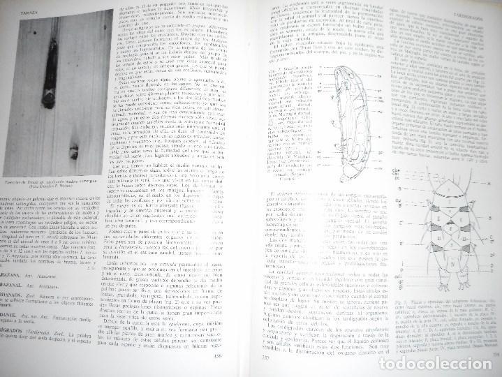Enciclopedias de segunda mano: JOSÉ Mª MARTÍNEZ-HIDALGO Y TERÁN Enciclopedia general del mar(8 tomos + apéndice) Y93031 - Foto 3 - 155242506