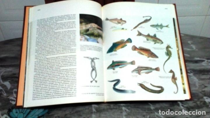 Enciclopedias de segunda mano: ENCICLOPEDIA COMPLETA FAUNA IBÉRICA - EL HOMBRE Y LA TIERRA - EDITORIAL SALVAT 1992 - Foto 3 - 155290834