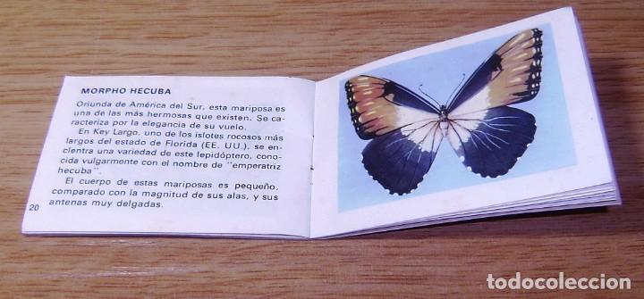 Enzyklopädien aus zweiter Hand: Mariposas,.Mini enciclopedia escolar,serie historia natural nº 4, Bruguera, 1970 - Foto 3 - 155540742