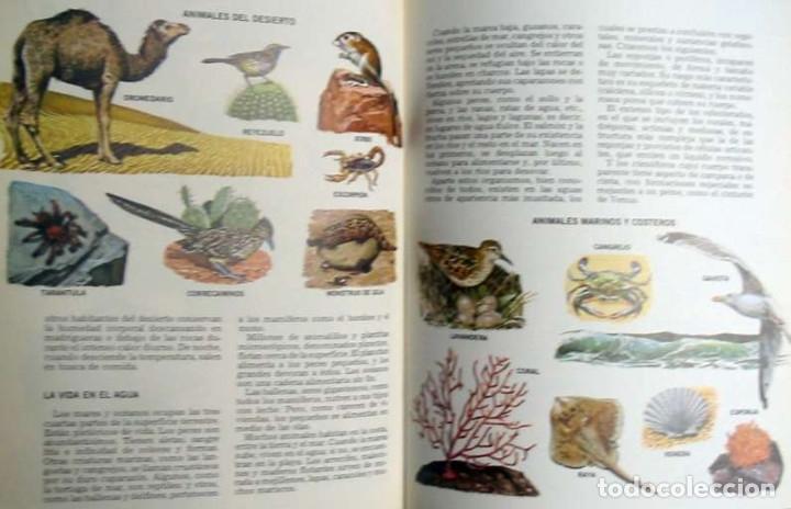 Enciclopedias de segunda mano: LECTUM JUVENIL - COMPLETA - ED. CREDSA 1980 - 4007 PÁGINAS - VER DESCRIPCIÓN Y FOTOS - Foto 4 - 175901774