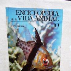 Enciclopedias de segunda mano: ENCICLOPEDIA DE LA VIDA ANIMAL Nº 10 EDITORIAL BRUGUERA. Lote 178721667