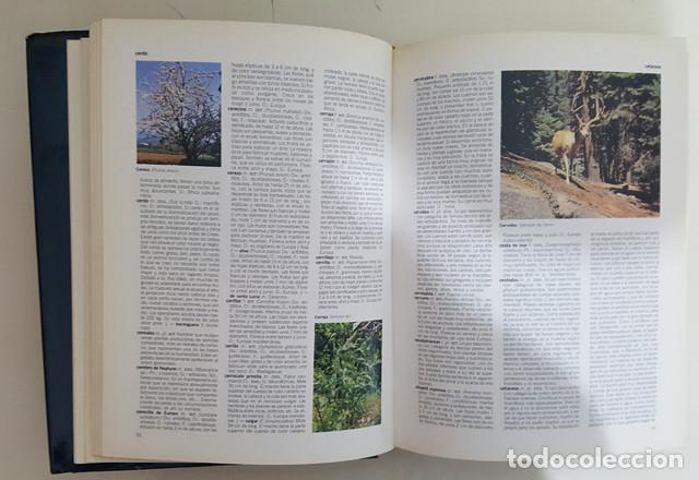 Enciclopedias de segunda mano: DICCIONARIO ENCICLOPEDICO GRAN VOX COMPLETA 10 TOMOS + 4 APENDICES, BIBLIOGRAF 1990, VER DESCRIPCION - Foto 11 - 186171923