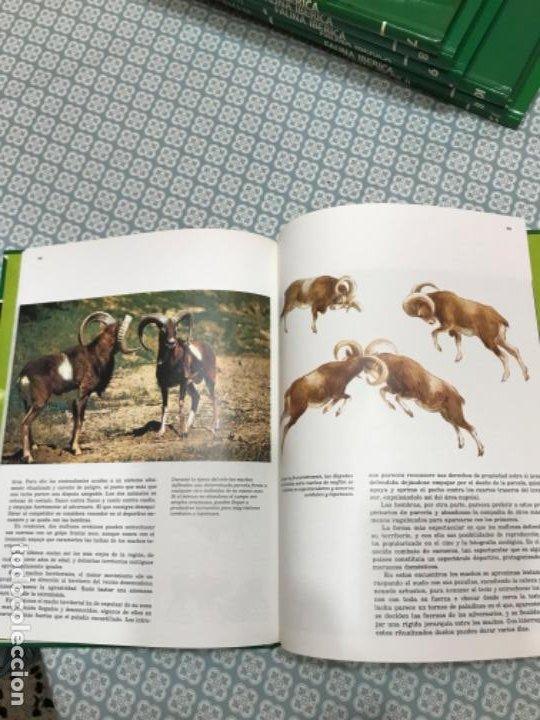 Enciclopedias de segunda mano: Fauna Ibérica - Foto 2 - 190195713