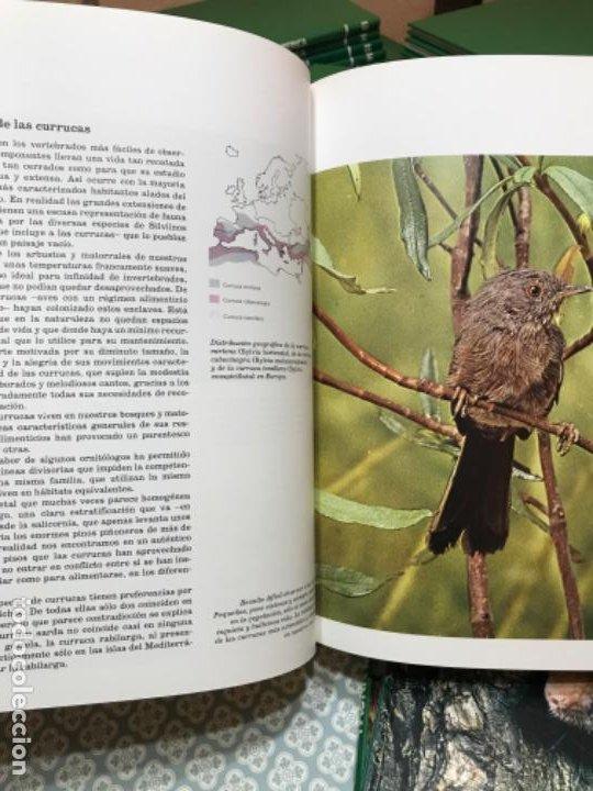 Enciclopedias de segunda mano: Fauna Ibérica - Foto 4 - 190195713