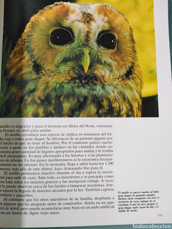 Enciclopedias de segunda mano: Los Secretos de la Naturaleza - Las Aves II - Club Internacional del Libro (1994) - Foto 4 - 190503482