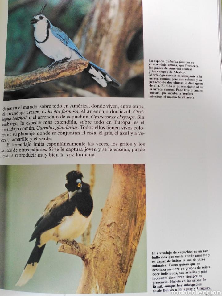 Enciclopedias de segunda mano: Los Secretos de la Naturaleza - Las Aves II - Club Internacional del Libro (1994) - Foto 5 - 190503482