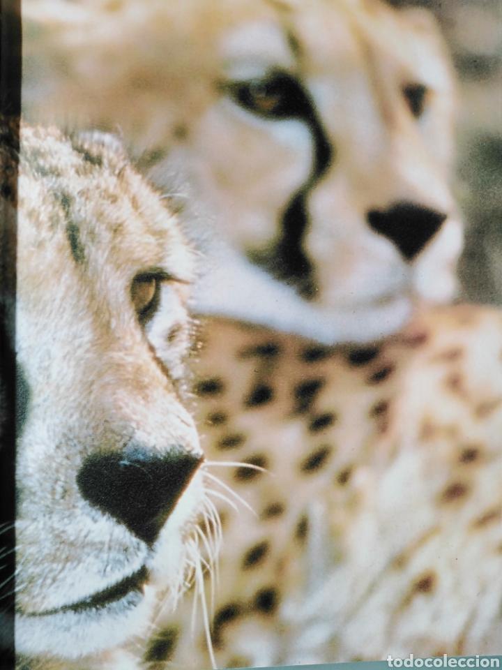 Enciclopedias de segunda mano: Los Secretos de la Naturaleza - Las Aves II - Club Internacional del Libro (1994) - Foto 6 - 190503482