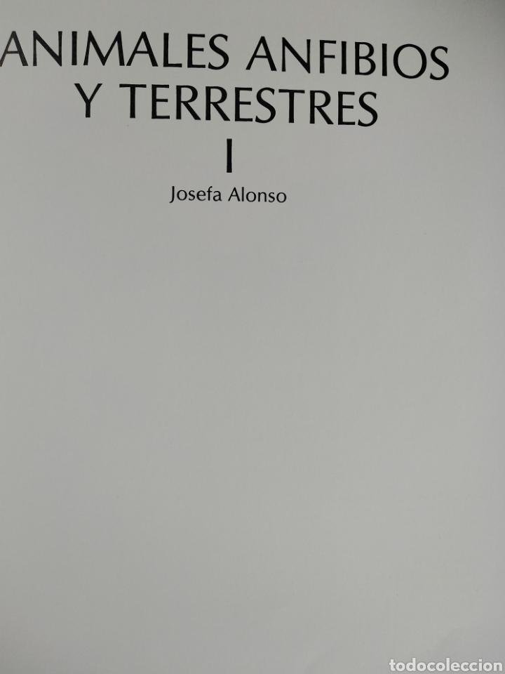 Enciclopedias de segunda mano: Los Secretos de la Naturaleza - Animales Anfibios y Terrestres I - (1994) - Foto 4 - 190505151