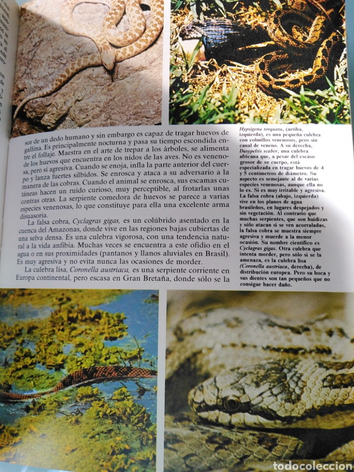 Enciclopedias de segunda mano: Los Secretos de la Naturaleza - Animales Anfibios y Terrestres I - (1994) - Foto 6 - 190505151