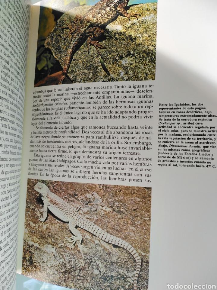 Enciclopedias de segunda mano: Los Secretos de la Naturaleza - Animales Anfibios y Terrestres I - (1994) - Foto 7 - 190505151
