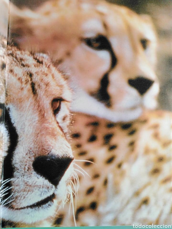 Enciclopedias de segunda mano: Los Secretos de la Naturaleza - Animales Anfibios y Terrestres II - (1994) - Foto 2 - 190506646