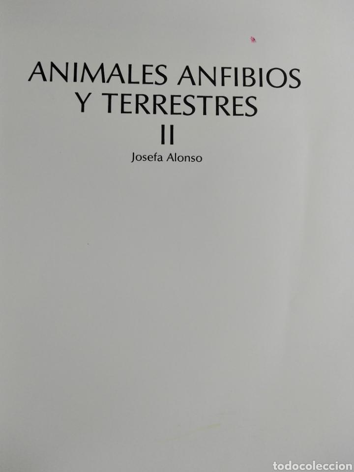 Enciclopedias de segunda mano: Los Secretos de la Naturaleza - Animales Anfibios y Terrestres II - (1994) - Foto 4 - 190506646