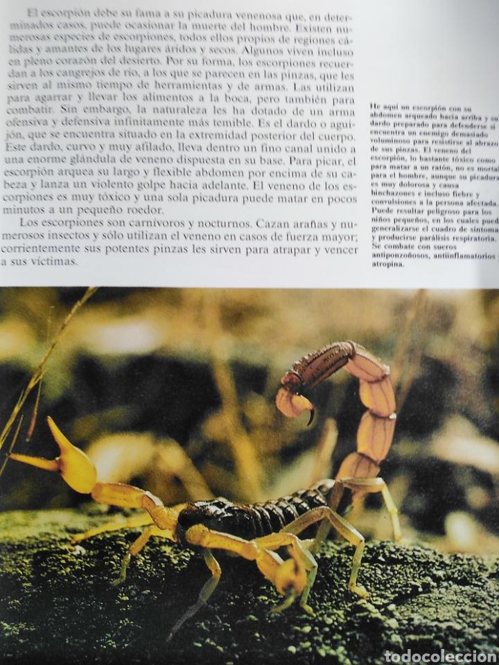 Enciclopedias de segunda mano: Los Secretos de la Naturaleza - Animales Anfibios y Terrestres II - (1994) - Foto 7 - 190506646