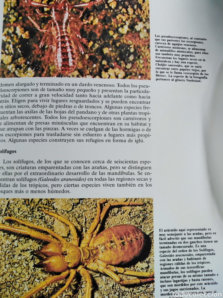 Enciclopedias de segunda mano: Los Secretos de la Naturaleza - Animales Anfibios y Terrestres II - (1994) - Foto 8 - 190506646