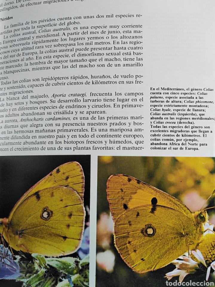 Enciclopedias de segunda mano: Los Secretos de la Naturaleza - Animales Anfibios y Terrestres II - (1994) - Foto 9 - 190506646