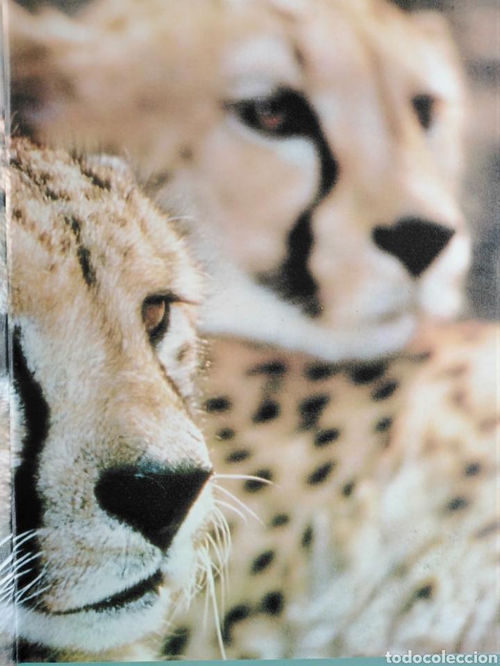 Enciclopedias de segunda mano: Los Secretos de la Naturaleza - Animales Acuáticos I (1994) - Foto 2 - 190508097