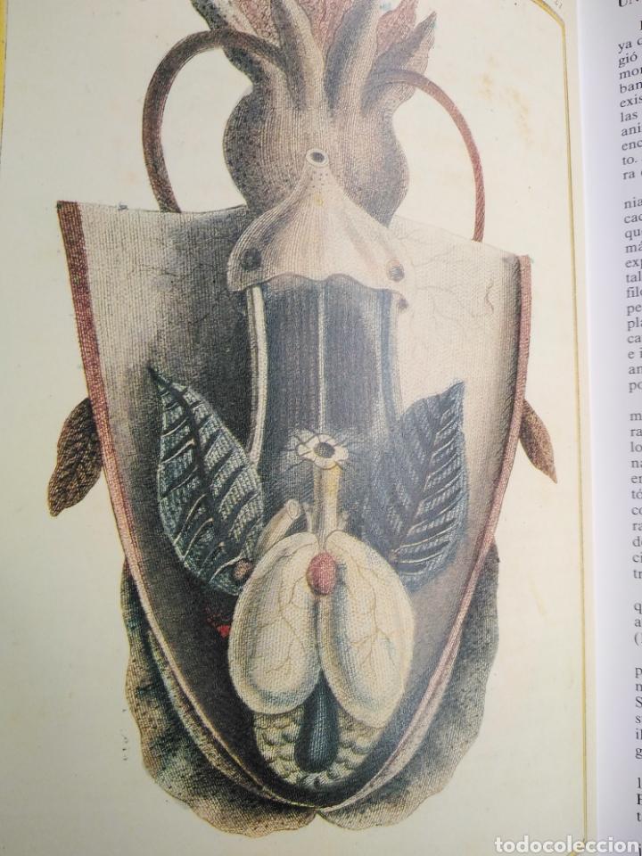 Enciclopedias de segunda mano: Los Secretos de la Naturaleza - Animales Acuáticos I (1994) - Foto 5 - 190508097