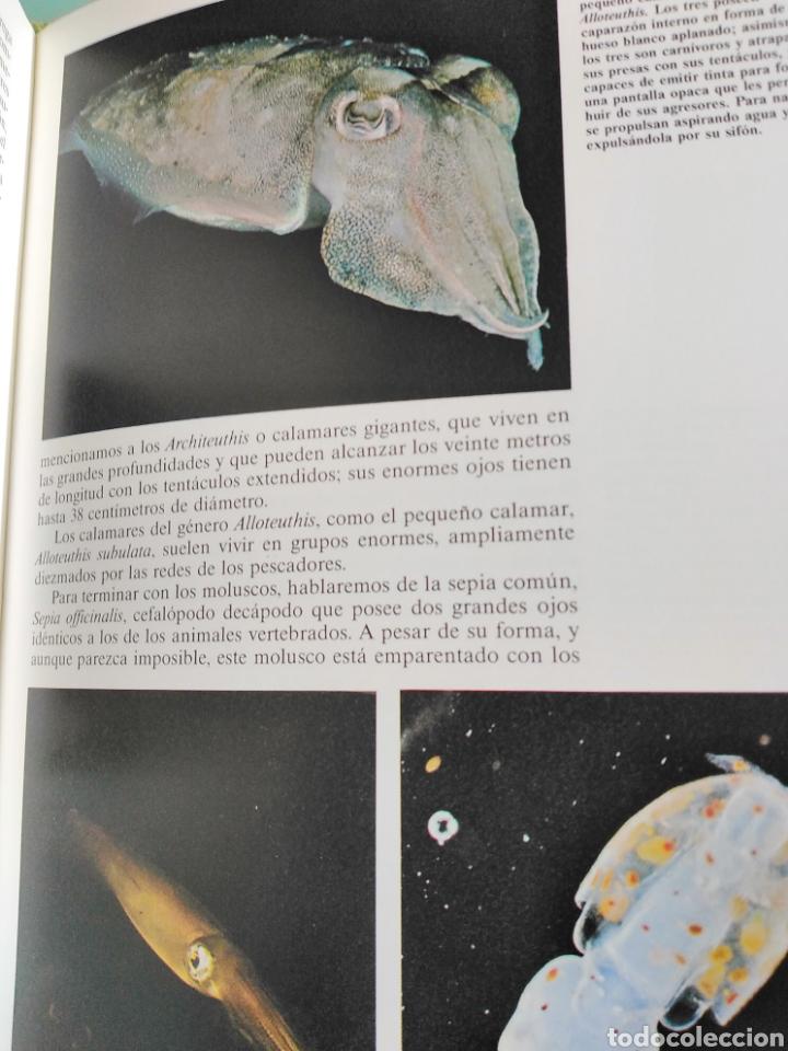 Enciclopedias de segunda mano: Los Secretos de la Naturaleza - Animales Acuáticos I (1994) - Foto 6 - 190508097