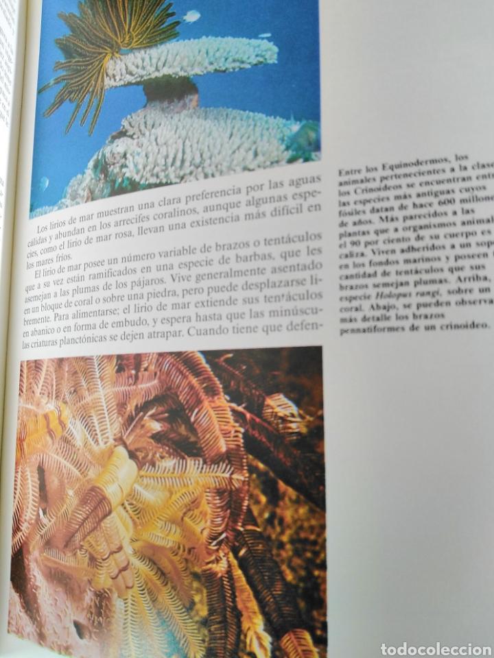 Enciclopedias de segunda mano: Los Secretos de la Naturaleza - Animales Acuáticos I (1994) - Foto 7 - 190508097