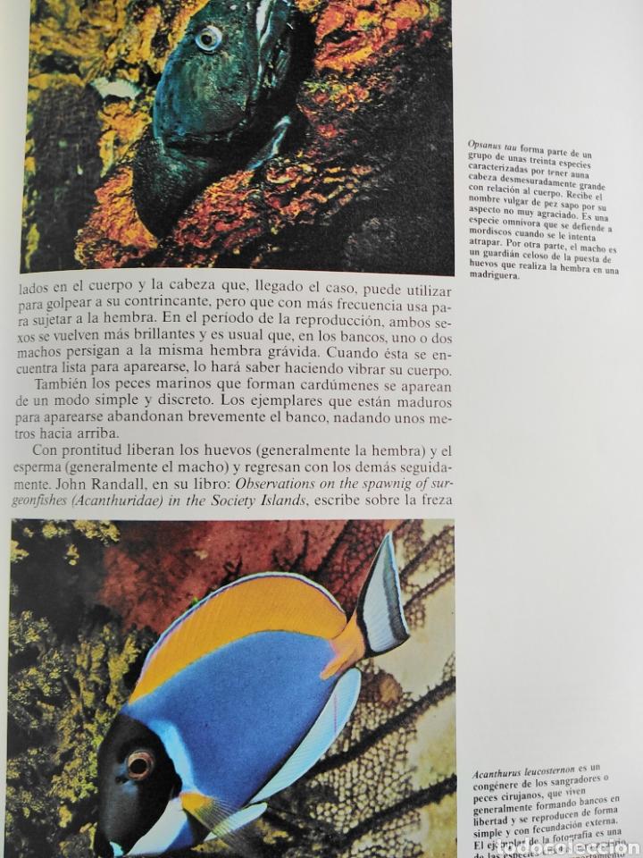 Enciclopedias de segunda mano: Los Secretos de la Naturaleza - Animales Acuáticos I (1994) - Foto 8 - 190508097
