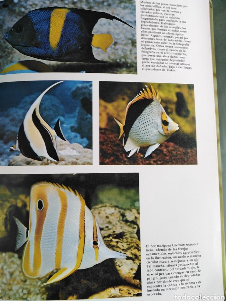 Enciclopedias de segunda mano: Los Secretos de la Naturaleza - Animales Acuáticos I (1994) - Foto 9 - 190508097