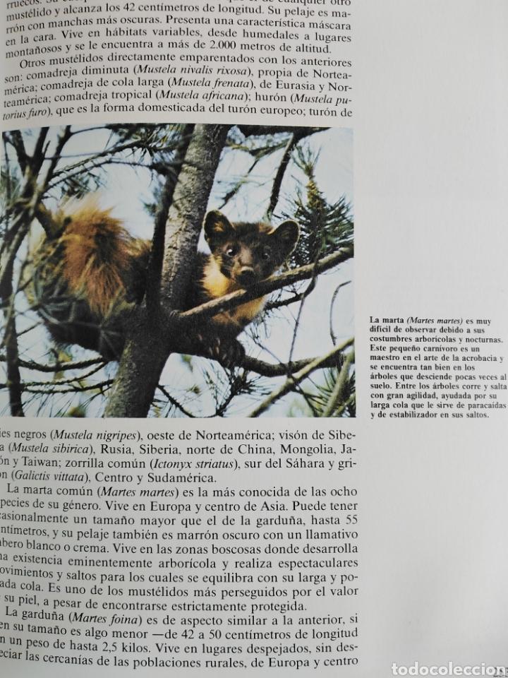 Enciclopedias de segunda mano: Los Secretos de la Naturaleza - Los Mamíferos II (1994) - Foto 5 - 190509220