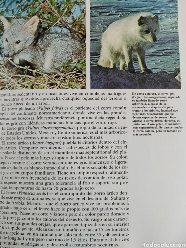 Enciclopedias de segunda mano: Los Secretos de la Naturaleza - Los Mamíferos II (1994) - Foto 6 - 190509220