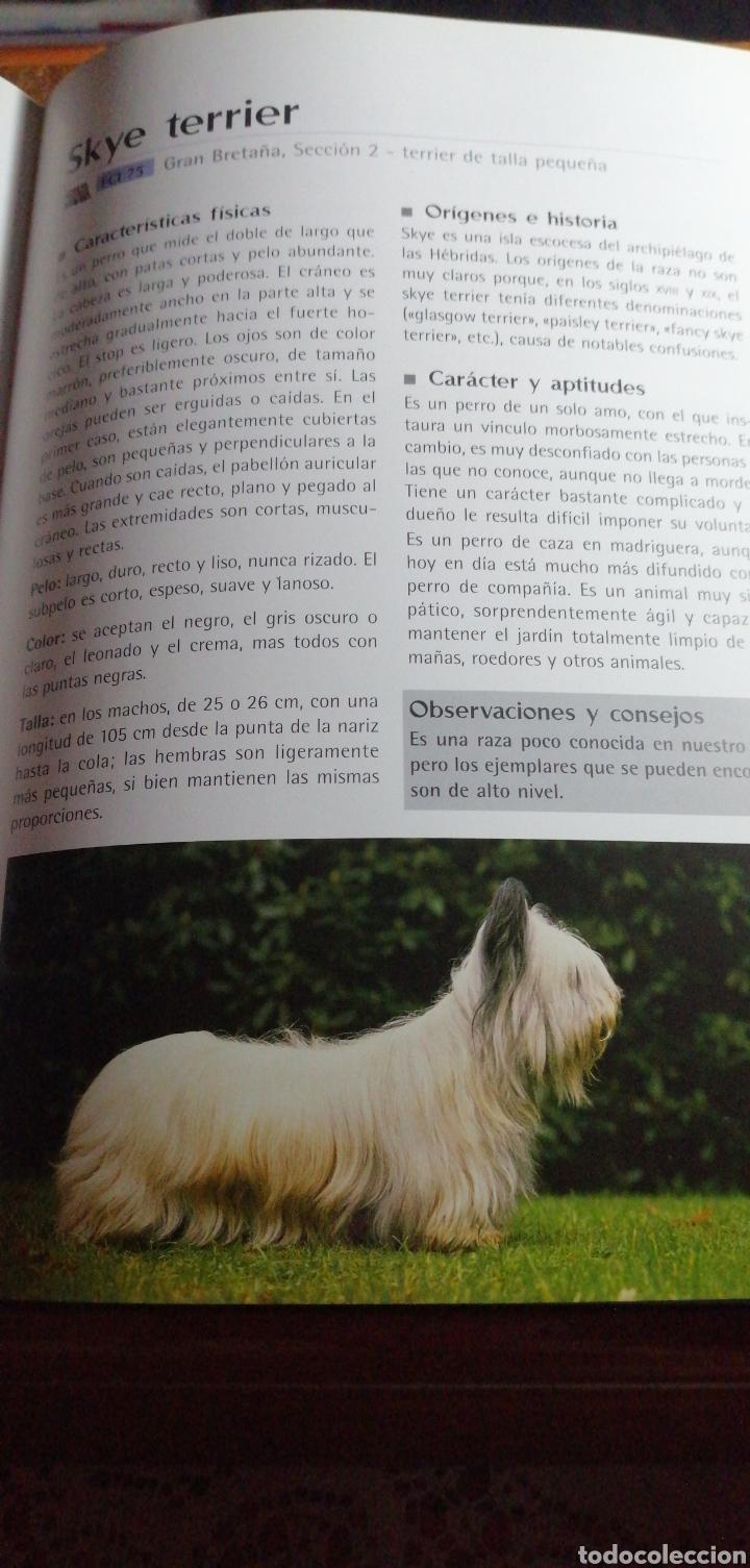 Enciclopedias de segunda mano: ENCICLOPEDIA MUNDIAL DE PERROS - Foto 5 - 191289781