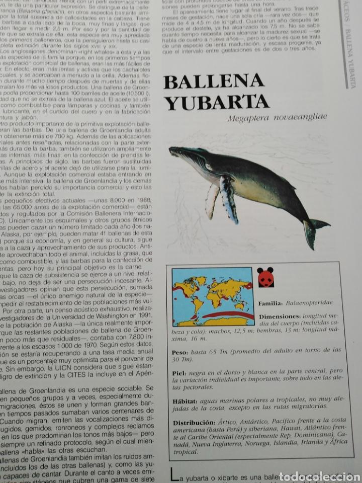 Enciclopedias de segunda mano: ENCICLOPEDIA SALVAT DE LA FAUNA MUNDIAL - ANIMALES EN PELIGRO - Foto 7 - 192042758