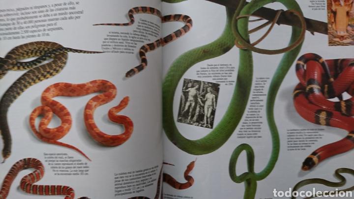 Enciclopedias de segunda mano: ENCICLOPEDIA VISUAL DE LOS SERES VIVOS TOMO II - EL PAIS AÑO 1993 244 PÁGINAS FN247 - Foto 6 - 195261023