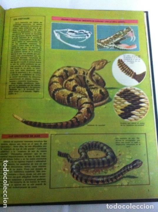 Enciclopedias de segunda mano: enciclopedia estudiantil - tomo nº. 2- gepublisa - año 1963 - Foto 2 - 208147771