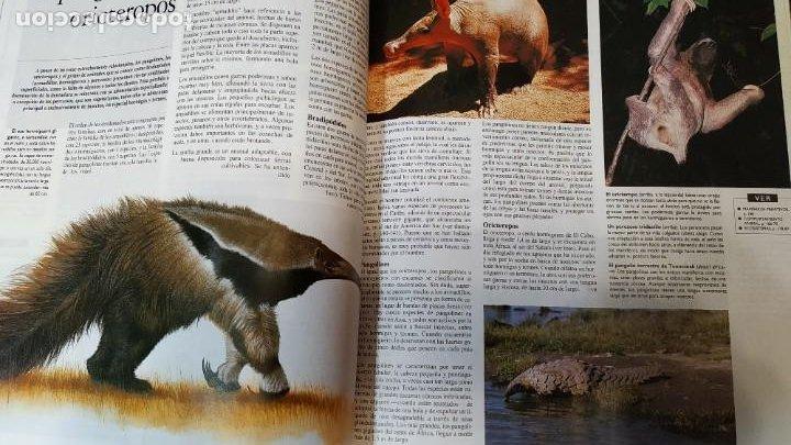 Enciclopedias de segunda mano: Enciclopedia Temática Guinness - Foto 3 - 208938085