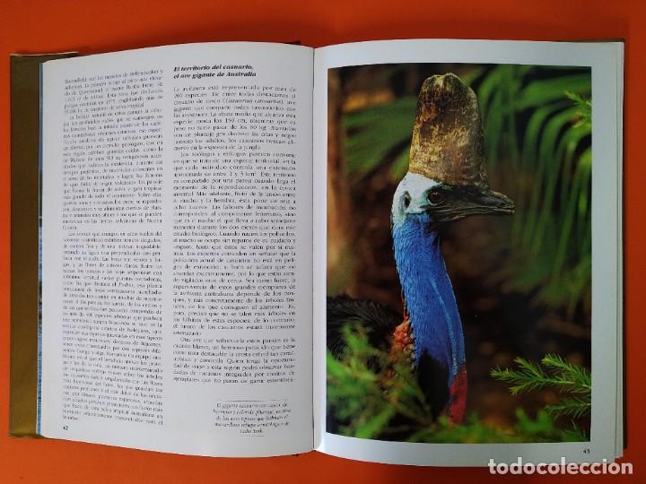 Enciclopedias de segunda mano: EL PATRIMONIO DE LA HUMANIDAD - COLECCION COMPLETA ( 10 TOMOS ) - EDILIBRO - AÑO 1996 ...L1630 - Foto 40 - 212596381